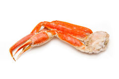 Snow crab (Chionoecetes opilio) or Tanner crab clusters isloted. On a white studio background royalty free stock image