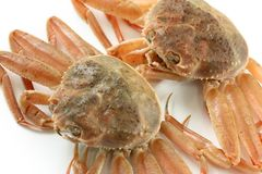 Snow crab(female) Royalty Free Stock Photography