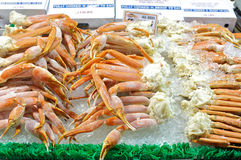Snow Crabs Royalty Free Stock Photo