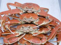 Snow Crabs. Stack of freshly cooked atlantic snow crabs Stock Photography