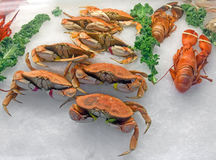 Snow crabs and lobsters on ice. In the seafood market Stock Image