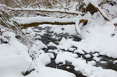 Snow at the creek. Fresh snow at the creek Royalty Free Stock Photo
