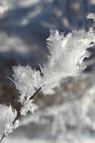 Snow crystals royalty free stock image