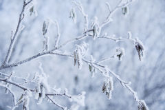 Snow crystals Stock Images