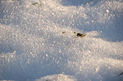 Snow Crystals. New snow and a speck of warm sun created this crystal formation of the snow crust Stock Photos