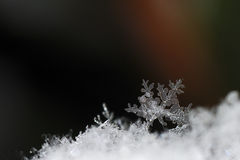Snow crystals big view Royalty Free Stock Photo