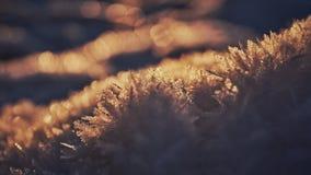 Snow crystals illuminated by the sun