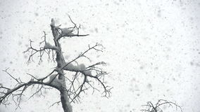 Snow Cyclone. Large flakes of snow slowly falling down. Slow Motion at a rate of 240 fps stock video