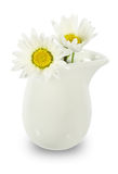 Snow daisy in the milk pitcher Royalty Free Stock Images