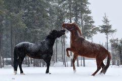 Snow day Royalty Free Stock Photo