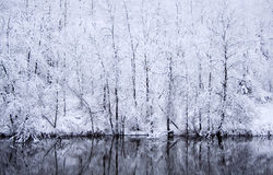 Snow day. Snow in a forest with reflection on river Stock Image