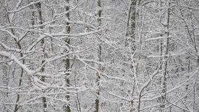 Snow in deciduous forest with snow covered trees stock video footage