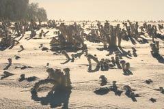 Snow desert. Snow cover the village, frozen plantation looks like desert Stock Images