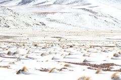 Snow between desert stock photo