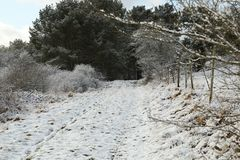 Snow on a Dirt Road/Farm Road leading into a Forest near a Eifel Village stock image