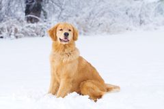 Snow dog Stock Photo