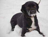 The snow dog leash Stock Photos