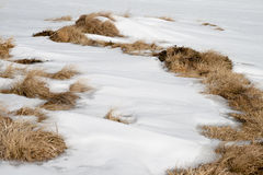 Snow and dried grass. Snow covered dead grass in the mountains Stock Image