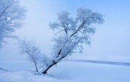 Snow drifts Stock Image