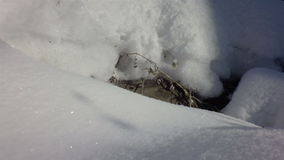 Snow drifts covered the sun in winter mixed forest. stock video footage