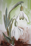 Snow Drop. Watercolor painting of two little snowdrops royalty free illustration