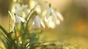 Snow drops stock footage