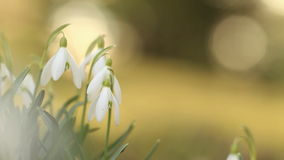 Snow drops stock video footage
