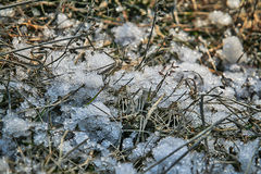 Snow in the dry grass, close-up Royalty Free Stock Photos