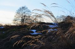 Snow and dry grass, South Bohemia Royalty Free Stock Photography