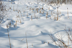 Snow with dry grass Stock Photography