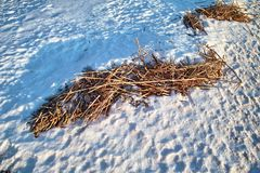 Snow and dry reed royalty free stock images