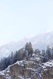 snow drzewa Obraz Royalty Free