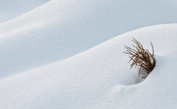 Snow dune Royalty Free Stock Photography