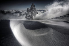 Snow Dunes. And Snow-covered tree Stock Photography
