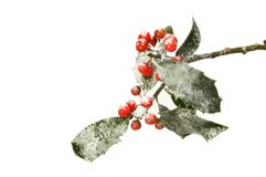 Snow dusted holly. With ripe red berries isolated against white Royalty Free Stock Photography