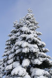 Snow end tree Royalty Free Stock Image