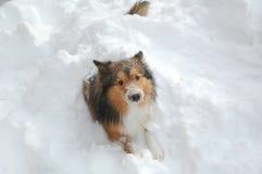 snow för 13 hund Arkivfoton