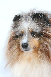 snow för 2 hund royaltyfria foton