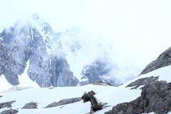 snow för drakejadeberg Royaltyfri Foto