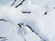 snow för frunch 4 Arkivbilder
