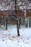 snow för målarfärg för höstkanfasolja Royaltyfria Foton