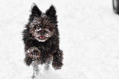 Snow förföljer fotografering för bildbyråer