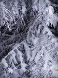 Snow förgrena sig på Arkivfoto