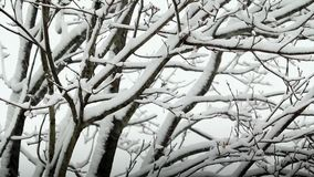 Snow failing on tree stock video footage