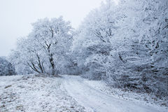 Snow Fairy just passed. Today through Hoia forest, Cluj Royalty Free Stock Photos