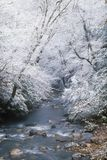 Snow fall along Little Pigeon River Stock Images