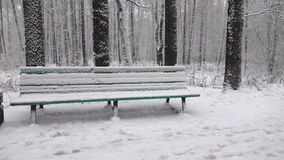 Snow fall in city park. Slow motion stock footage