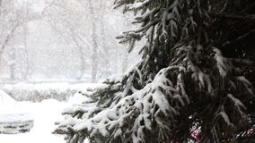 Snow fall and deposits of snow on fir tree stock footage