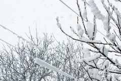 Snow fall landscape Royalty Free Stock Image