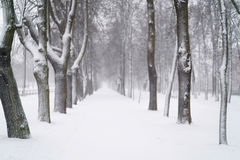 Snow fall in the morning on town alley Stock Image